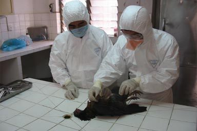 Grip aviar